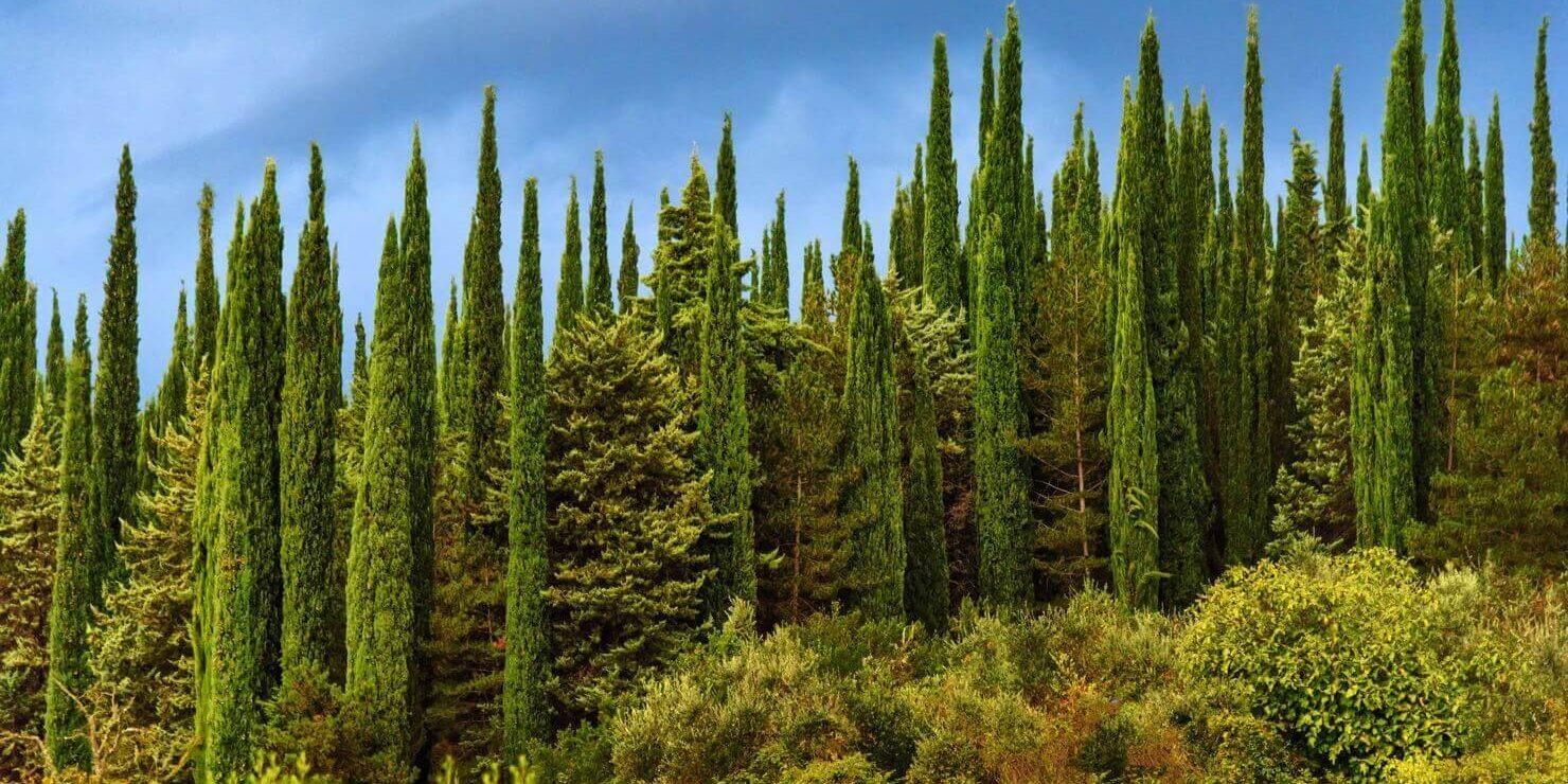 04-VisitChianti-Cipresseta-cipressi-chianti-toscana-1480x1068